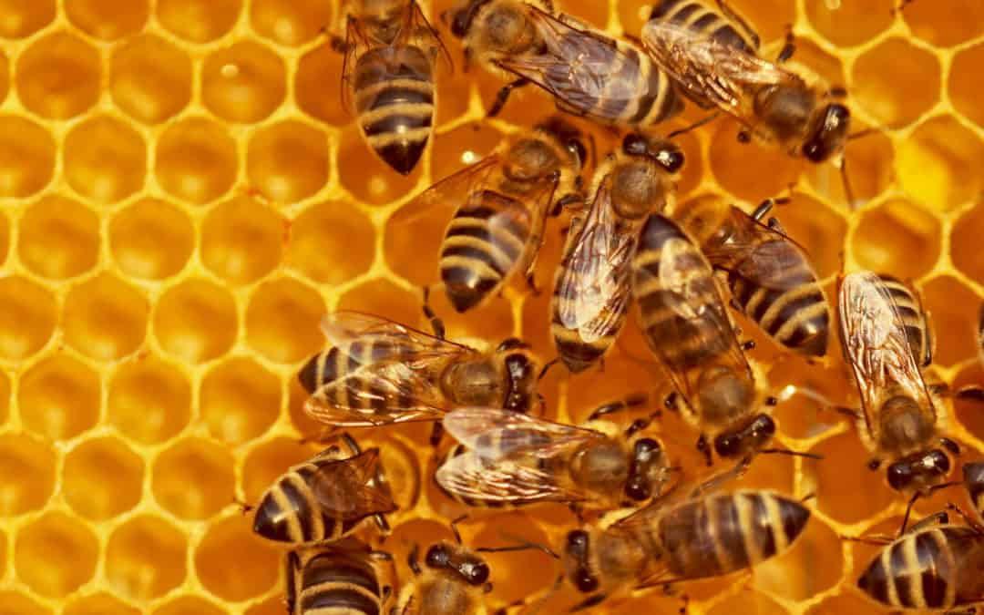 Let's save the bees with machine learning